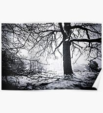 Lonely trees Poster