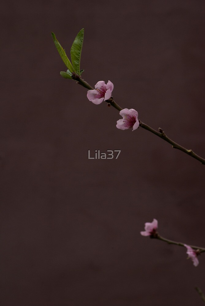 Japanese stanza by Lila37