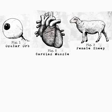 An Eye, a Heart, and a Ewe. by Miachalistic