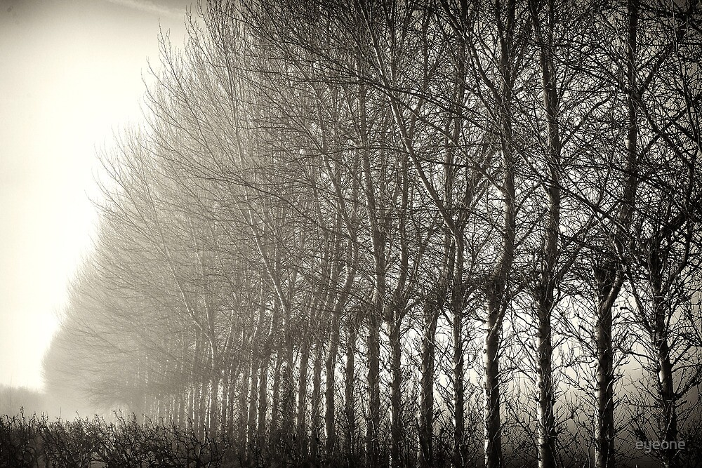 Trees by eyeone