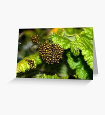 Garden Spiderlings Greeting Card