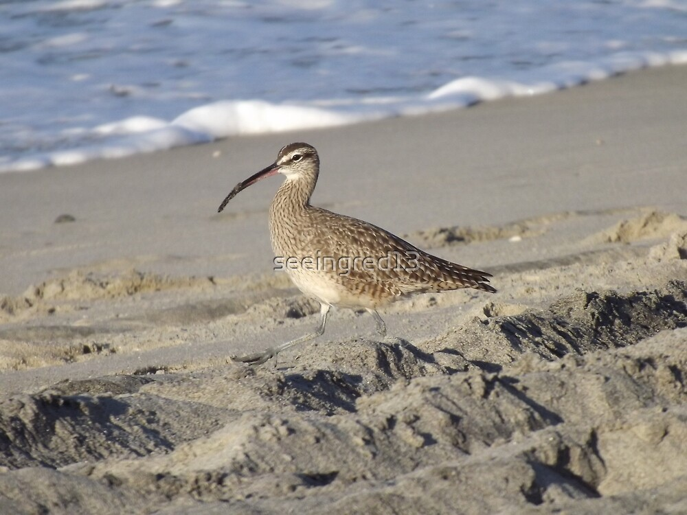 Spotted Dowitcher or Common Snipe? by seeingred13
