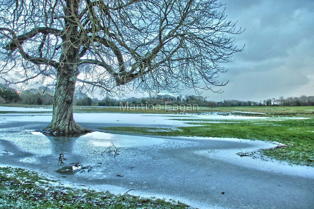 An icy day at the park by Martina Fagan