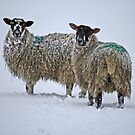 'White out' in Wharfedale by Rebecca Mason