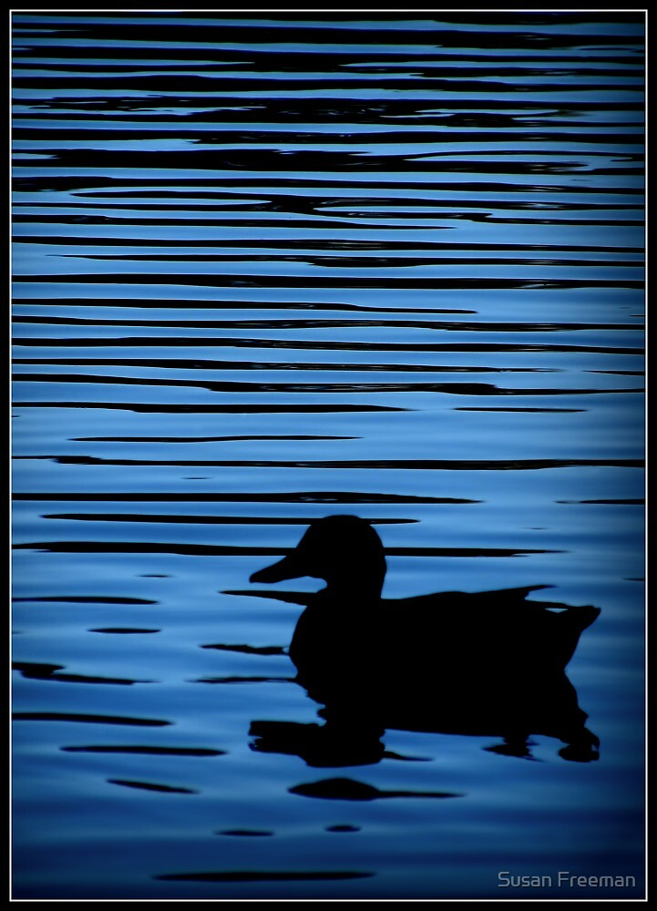 Evening Silhouette by Susan Freeman