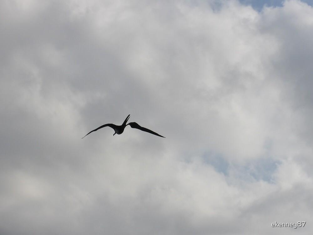 Gull by ekenney87