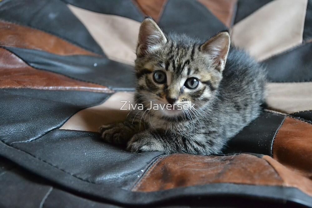 Kitty by Ziva Javersek
