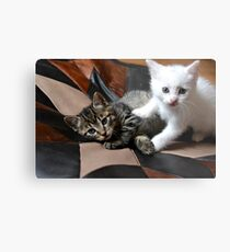 Playing cats Metal Print