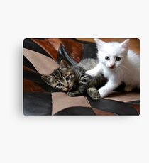 Playing cats Canvas Print