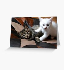 Playing cats Greeting Card
