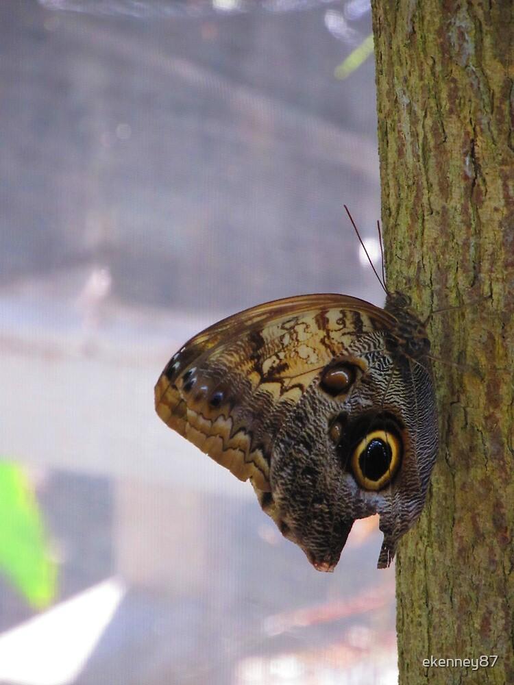 Owl Butterfly by ekenney87
