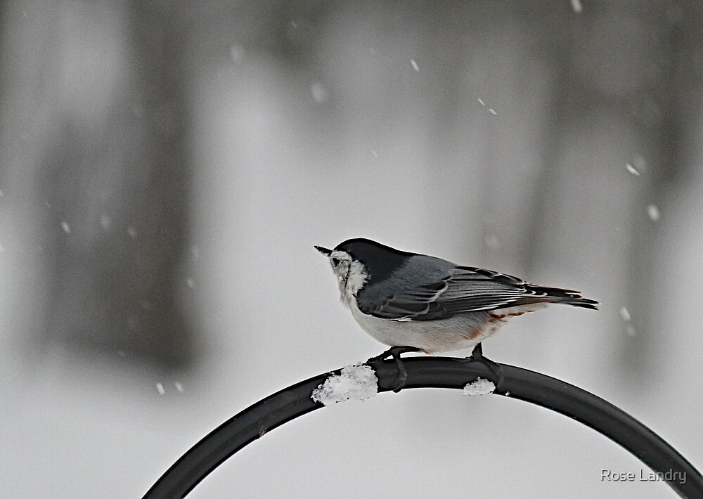 Let It Snow! by Rose Landry