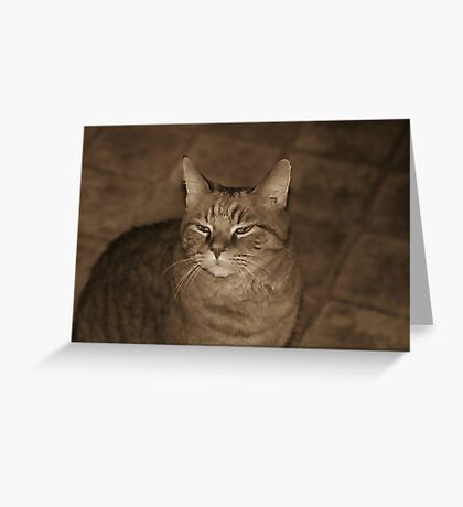 Squinty Eyed Greeting Card