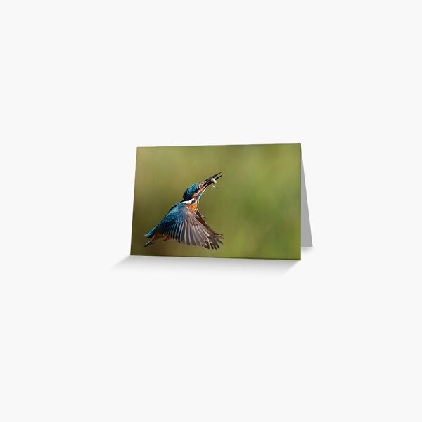 Kingfisher in flight with fish Greeting Card