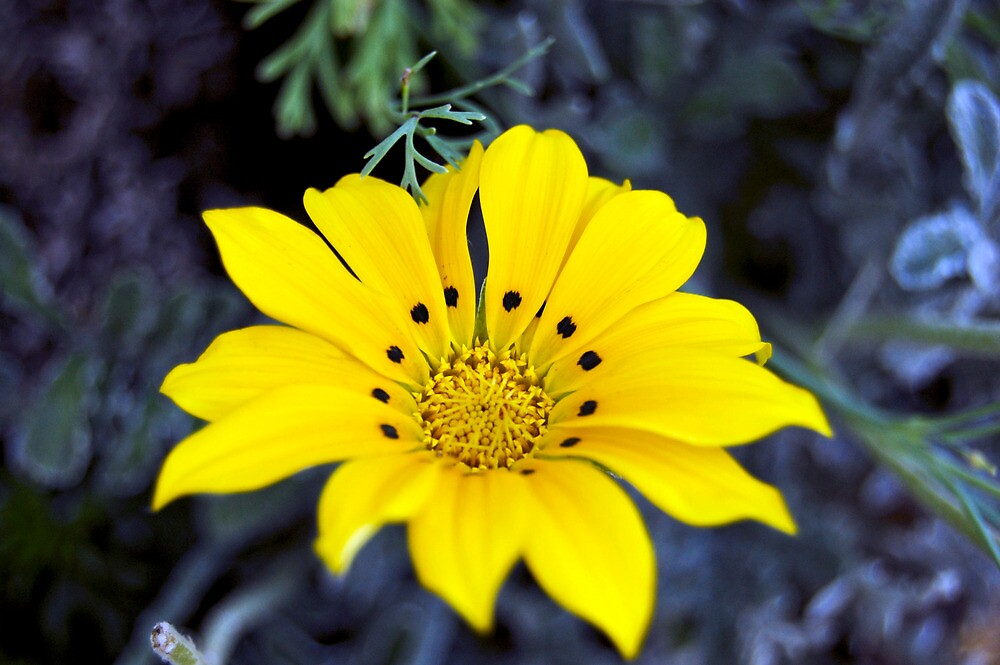 Yellow Flower by d1373l