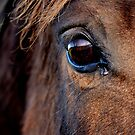 Look into the soul of a horse by adbetron