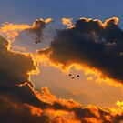 Birds in Flight  by sandralee1989