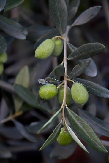 Olives by GW-FotoWerx