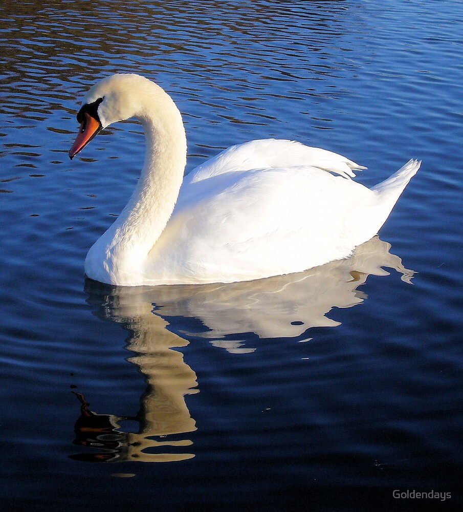 Swanning Along by Goldendays