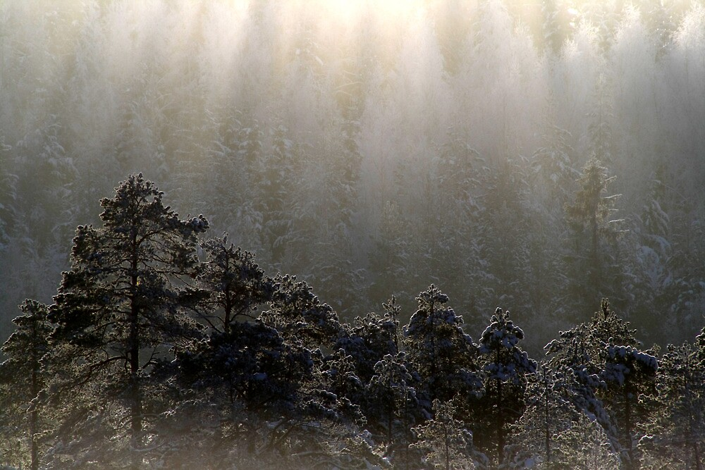 23.1.2013: Forest and Light by Petri Volanen