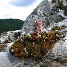Moss flower by João Figueiredo