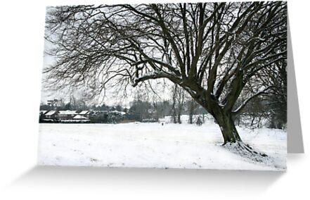 Winter Walk by Samantha Higgs
