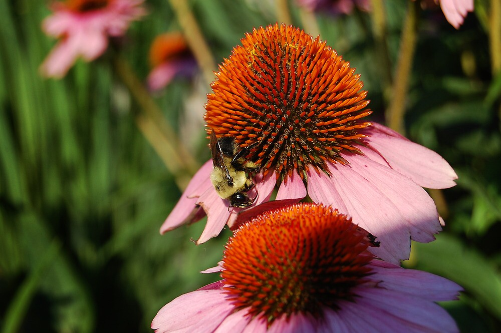 Busy Bee 2 by d1373l