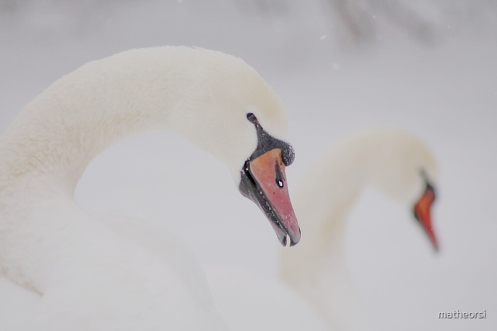 Two swans in winter by matheorsi