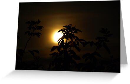 Moonstruck by heinrich
