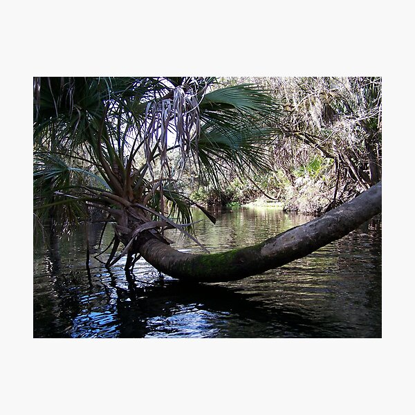 Palm Tree Photographic Print