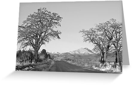 Country Drive Longs Peak View BW by Bo Insogna