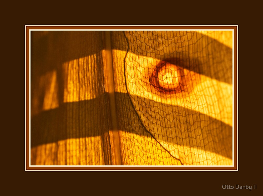Leaf Abstract by Window Light by Otto Danby II