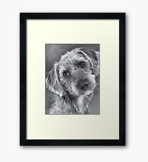 Cute Pup in Black and White Framed Print