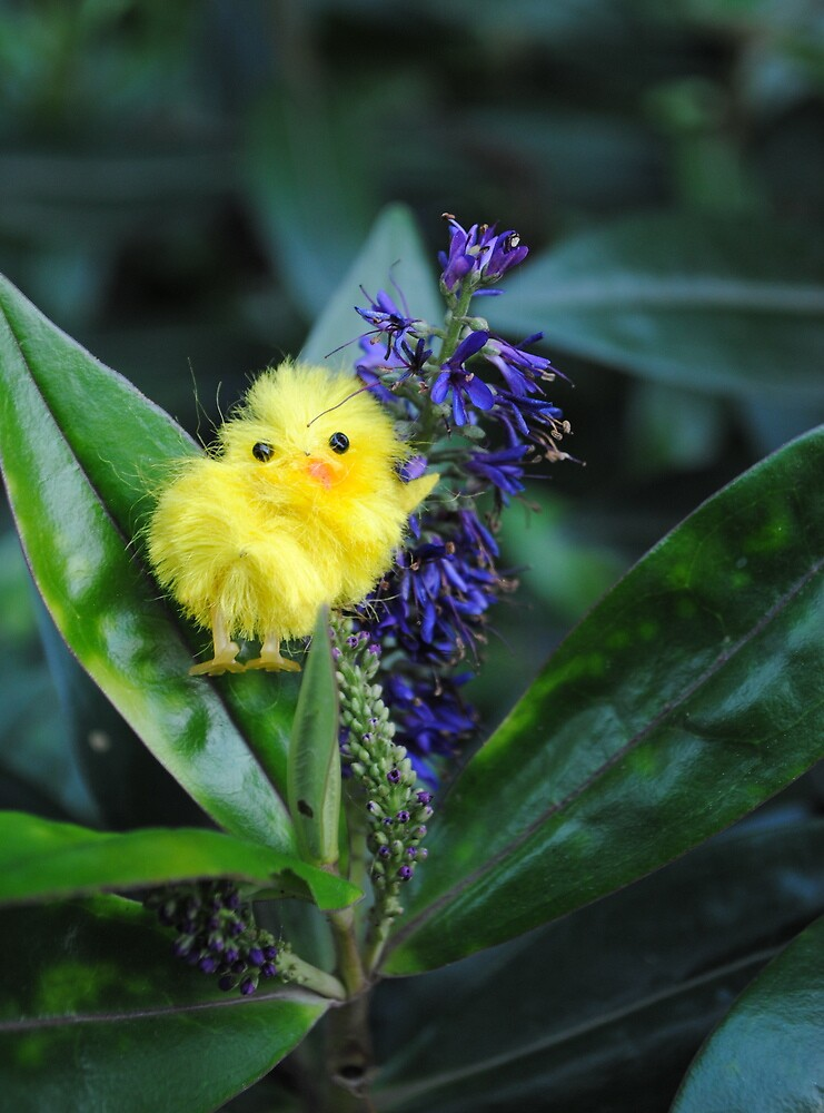 Chick on Blue Bloom by Humperdink