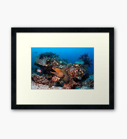 Reef Boss Framed Print
