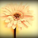 Flower print by kelly-m-wall