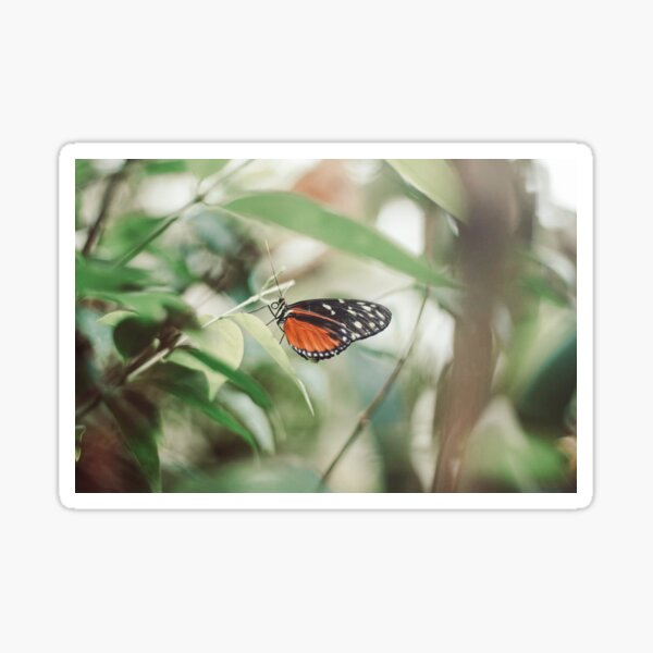 Monarch butterfly nature photography Sticker