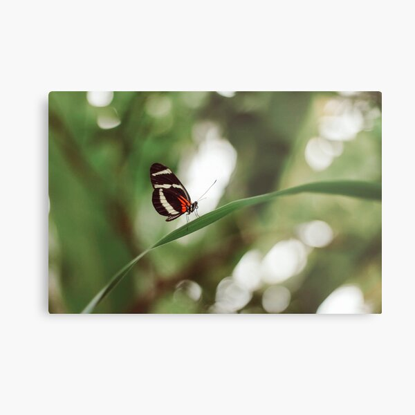 Butterfly nature photograph Metal Print