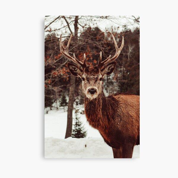 Elk photograph Canvas Print