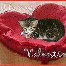 Valentine Kitten by Kenneth Hoffman