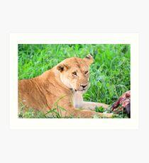 Lioness and kill Art Print