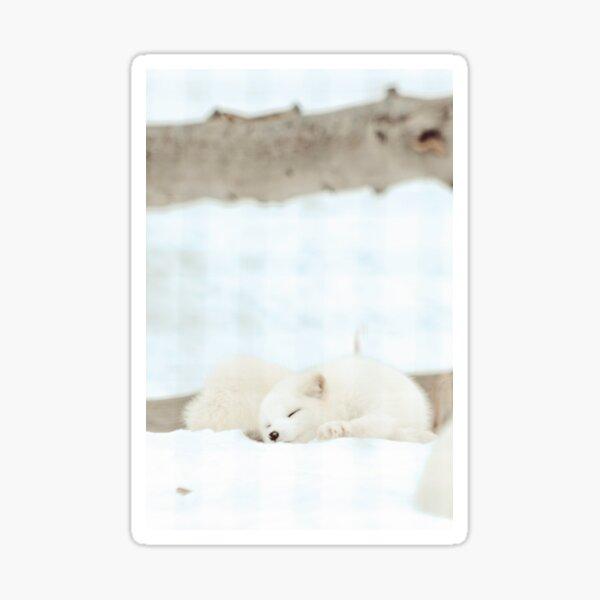 Arctic fox in winter photograph Sticker