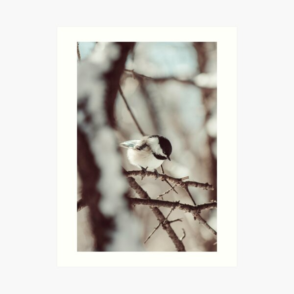 Chickadee in winter photograph Art Print