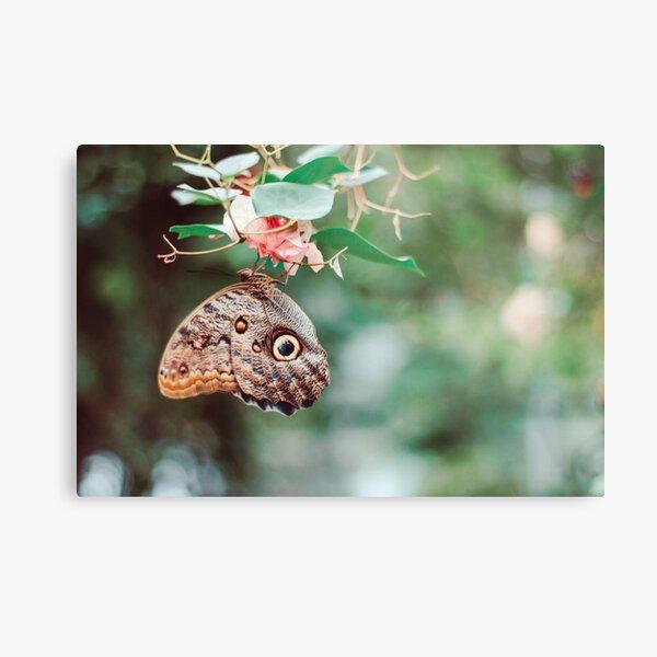 Butterfly photograph Metal Print