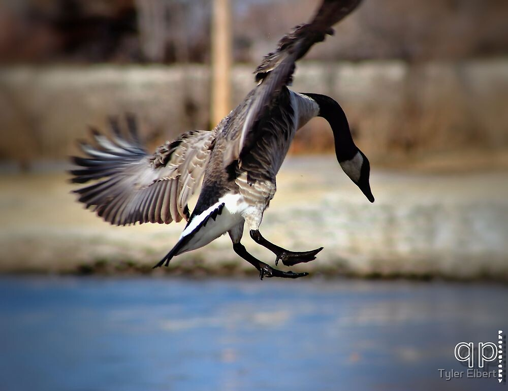 In for a Landing by Tyler Elbert