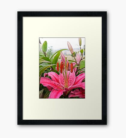 Lovely lady Lilium Framed Print