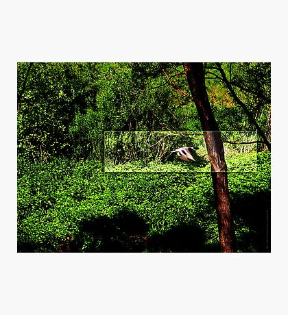Duck flying by VRS2 Photographic Print