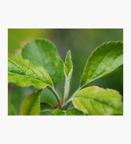 A New Leaf is Born VRS2 Photographic Print