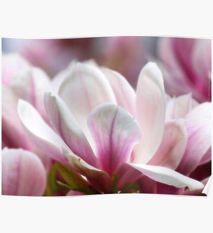 Magnolias VRS2 Poster