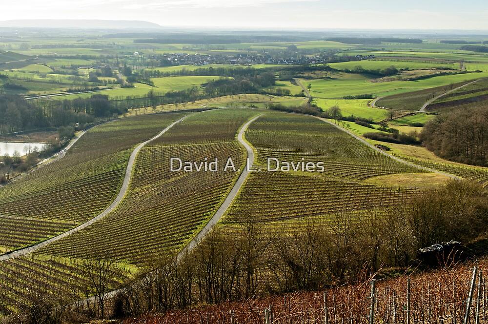 Vineyards in Winter, Oberschwarzach, Franconia, Germany. by David A. L. Davies